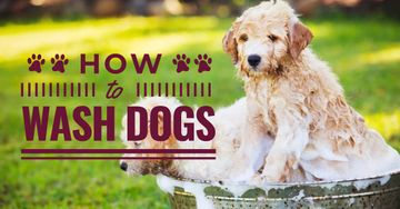 How to wash dogs advices with wet Dogs