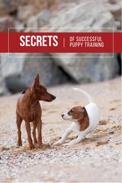 Secrets of puppy training