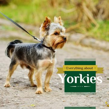 Adorable little Yorkshire Terrier