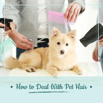 Pet hair salon Offer