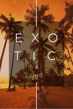 Exotic Tropical Resort Palms in Orange