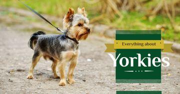 Yorkshire Terrier on Walk
