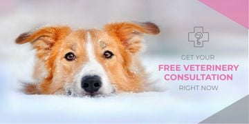 Free veterinary consultation