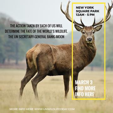 Deer on Natural Habitat