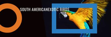 Exotic Birds Shop Ad Flying Parrot