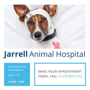 Animal Hospital Ad with Cute injured Dog