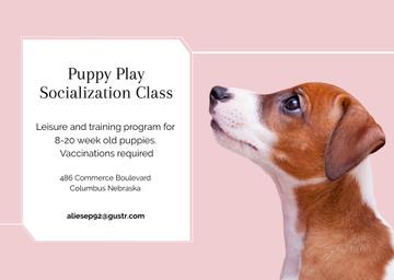 Puppy play socialization class