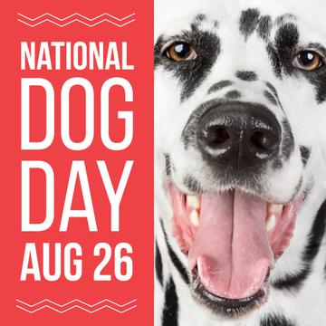 National dog day with Funny Dalmatian