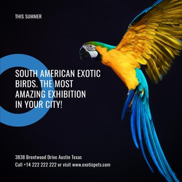 Exotic birds Exhibition Announcement with Bright Parrot