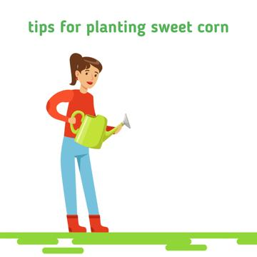 Girl watering corn plants