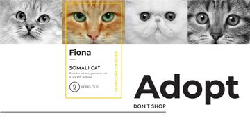 Somali cat poster