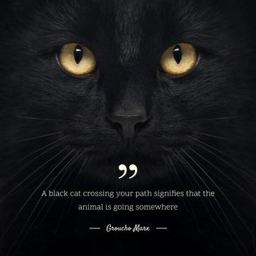 Citation about Black Cat