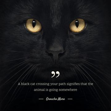 Citation about Black Cat