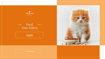 Feed your kitten right