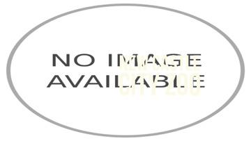 Flying green parrot
