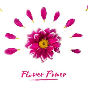 Purple daisy flower with petals