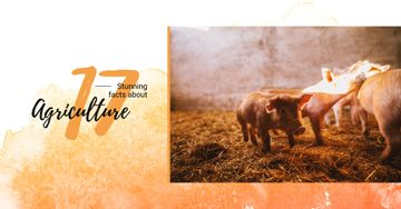 Little pigs on farm