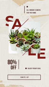 Sale Ad Decorative flowers in pots