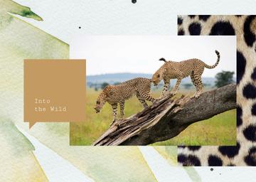 Wild cheetah in natural habitat