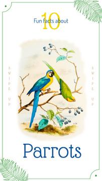 Parrot birds on a tree
