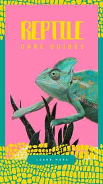 Blue chameleon reptile