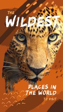 Wild leopard in natural habitat