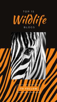Wild zebra animal