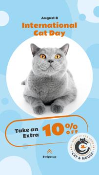 Cat Day Sale Cute Grey Shorthair Cat