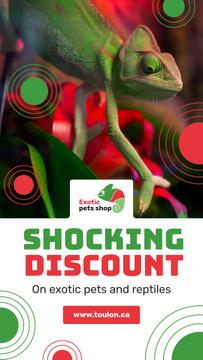Pet Shop Offer Green Chameleon