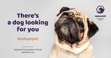 Pet Adoption Ad Cute Pug Dog