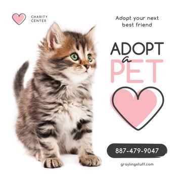 Adoption Center Ad Cute Grey Kitten