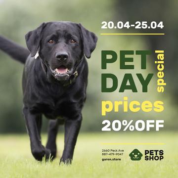 Pet Day Offer Running Black Retriever