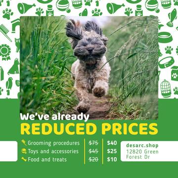 Pet Supplies Offer Dog Running in Green Grass