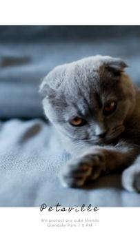 Pet Care Service with Scottish Fold Cat