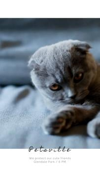Pet Care Service with Scottish Fold Cat