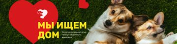 Pet Adoption Center Promotion with Funny Dogs