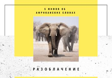 Wildlife Facts with African Elephants in Habitat
