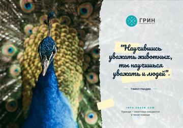 Animals Quote with Male Peacock Bird