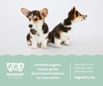 Dog treats for cute Corgi Puppies
