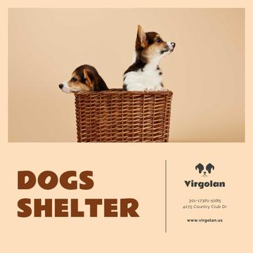 Pet Shelter Promotion Puppies in Basket