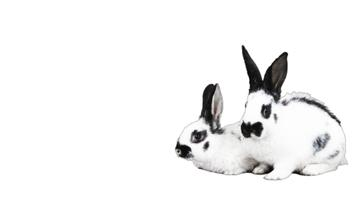 Special Easter Fitness Offer with Rabbits