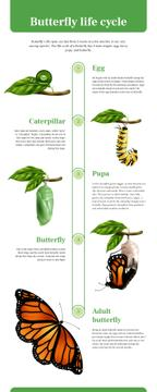 Process infographics about Butterfly life cycle