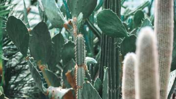 Cacti in Botanical Garden