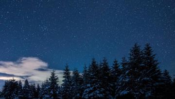 Snowy Forest at starry Winter night
