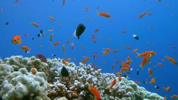 Beautiful Corals and Fish in the Sea