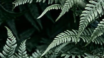 Green fern Leaves frame
