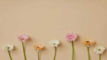 Gerbera Flowers border