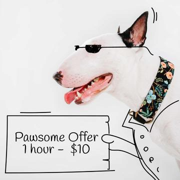 Dog Walking services offer with Funny bull terrier
